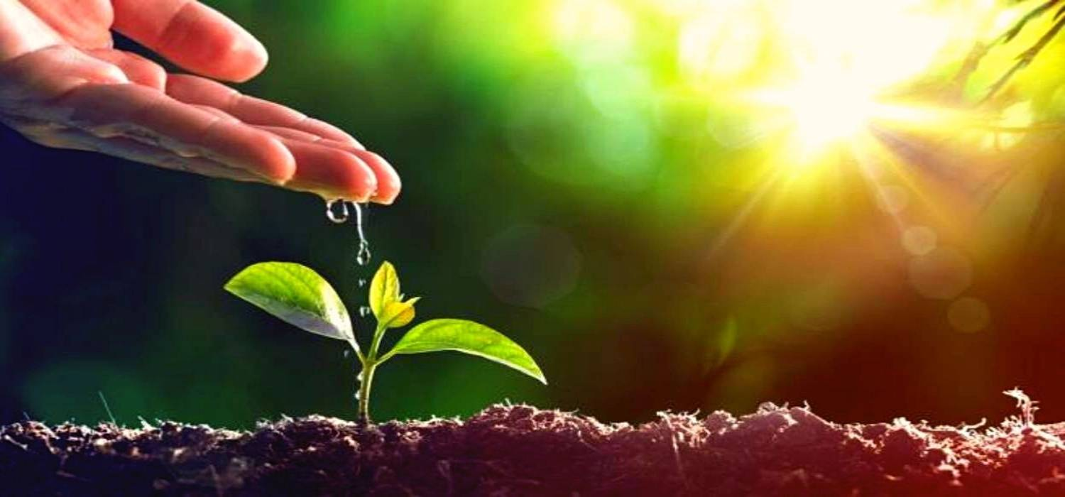 How to Keep Our Environment Healthy – Try to do Something Special on World Environment Day 2021